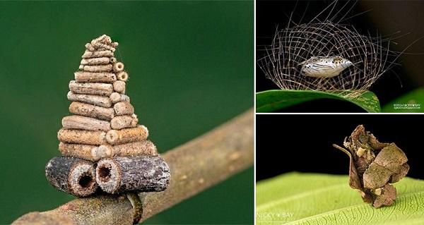 12 крошечных творений, созданных мельчайшими архитекторами природы
