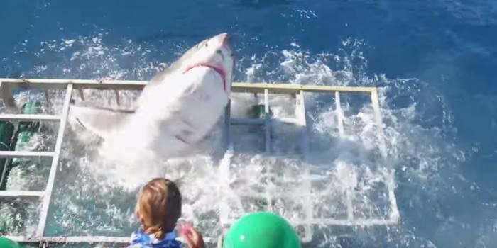 Большая белая акула ворвалась в клетку с водолазом