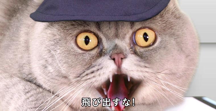 Японцы выпустили ролик о кошачьей безопасности на дорогах