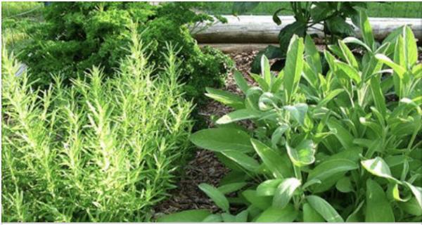 Врачи утверждают, что хрящи бедра и коленей восстанавливаются за неделю с использованием этих трав!