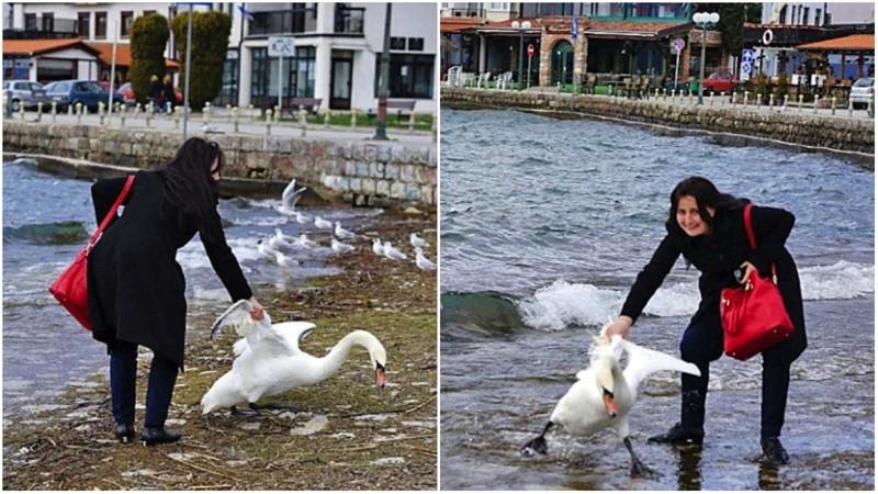 Ради фотографии она вытащила лебедя из озера