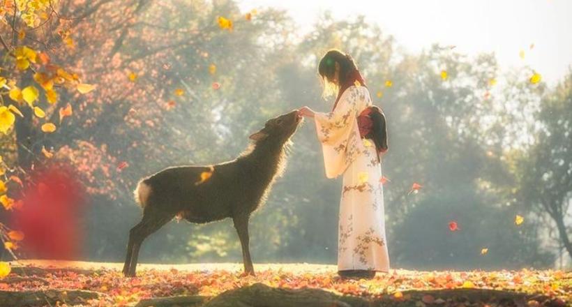 Фотограф сделал невероятные осенние снимки в Японии