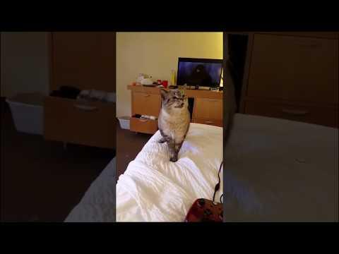 Разразившийся эпичным чихом кот заворожил зрителей