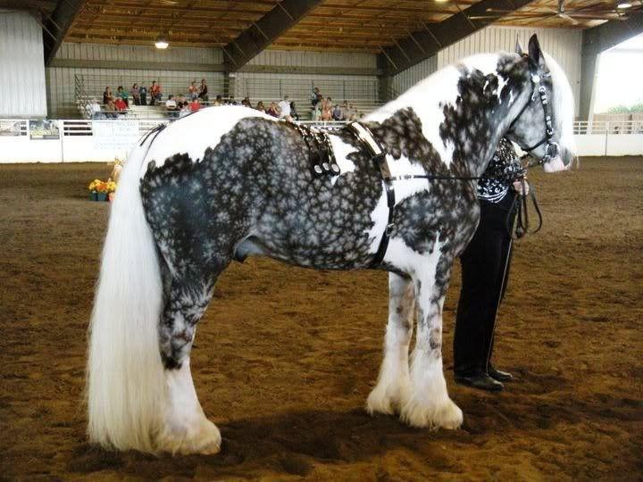 ТЕРЕМОК. 20 самых красивых и самых необычных лошадей