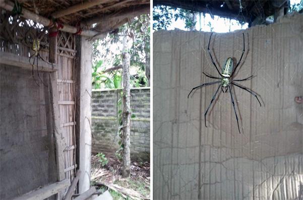 Мужчина обнаружил этот ужас на заднем дворе своего дома!
