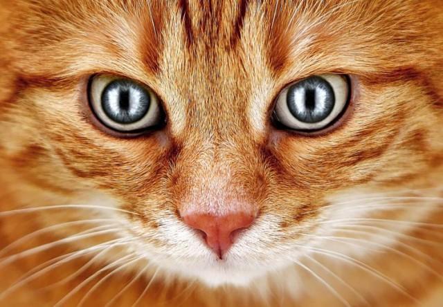 Ученый рассказал, как инопланетяне наблюдают за нами при помощи кошек