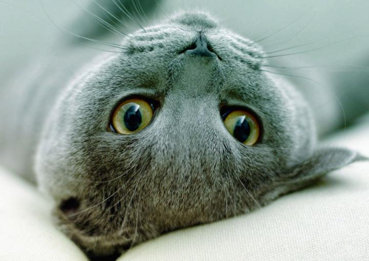 Кошки перенимают привычки хозяев