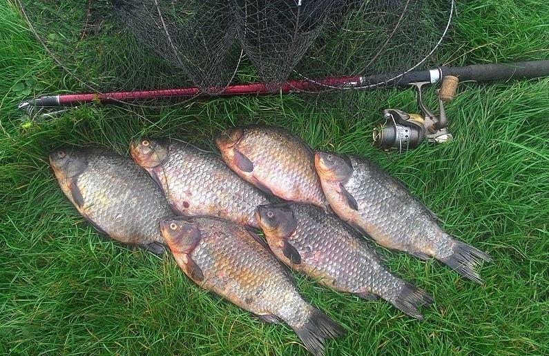 прогноз клева рыбы в новогрудке