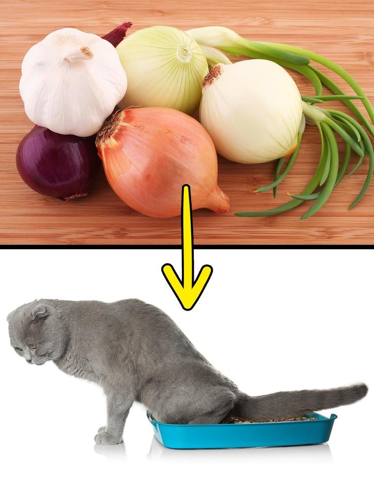 10 обычных для нас продуктов, которые могут нанести вред вашему питомцу