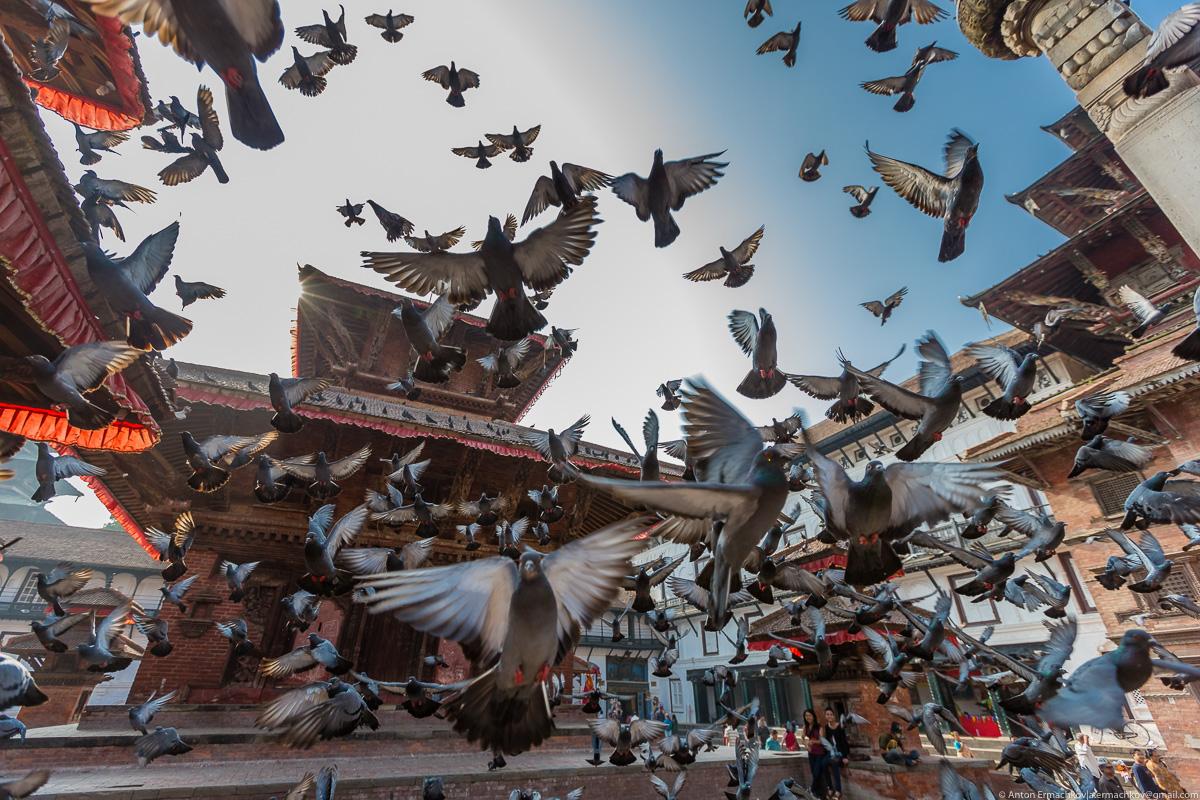 В поисках охотников за медом диких пчёл, Катманду  -  площадь Дурбар