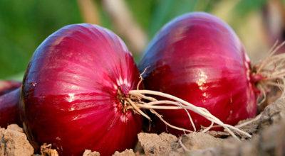 Как употреблять фиолетовый лук, чтобы существенно повысить иммунитет и улучшить самочувствие