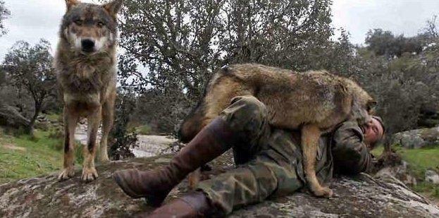 Испанский «Маугли» хочет вернуться к волкам, разочаровавшись в людях