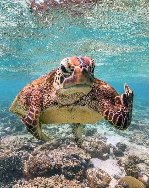 Черепаха показала дайверу неприличный жест