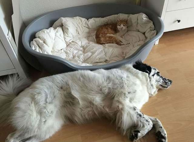 Наглые коты (17 фото)