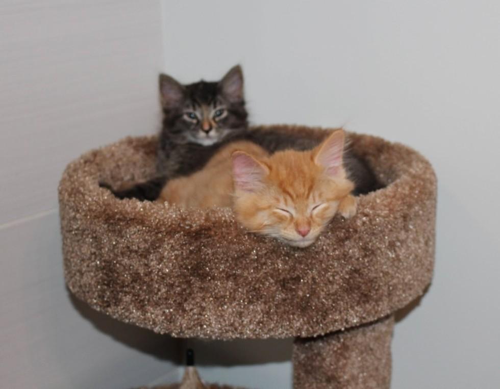 Котики, которые не готовы расстаться с любимой кроваткой.