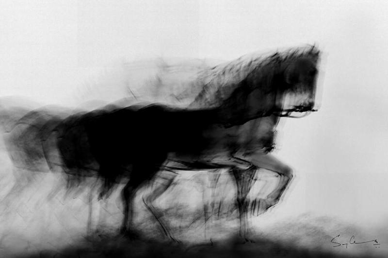 Вороной конь в Мумбаи индия, красота, талант, творчество, фото, фотограф, фотография, художник