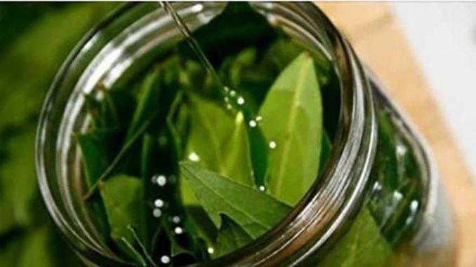 Знаете ли вы, что вы можете получить при смешивании оливкового масла с лавровыми листьями? Вы будете удивлены!Удивительная смесь!