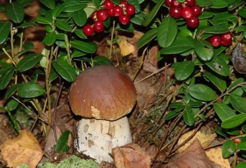 Минсельхоз: И грибы посчитаем, и ягоды