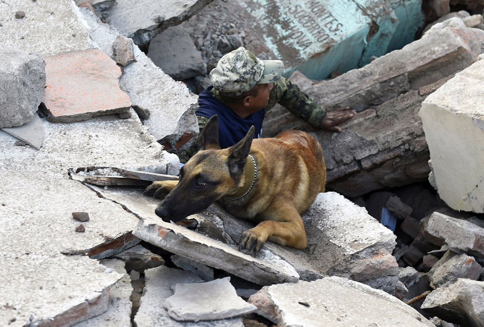 Как трудятся собаки обученные доставать людей из-под завалов