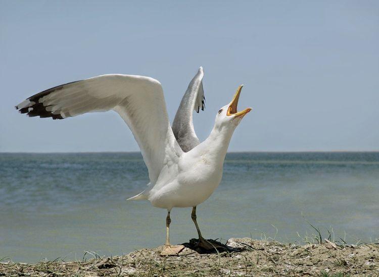 Самые опасные птицы