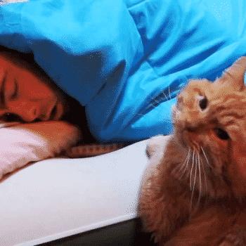 Ежедневно, в 05:00 этот кот …