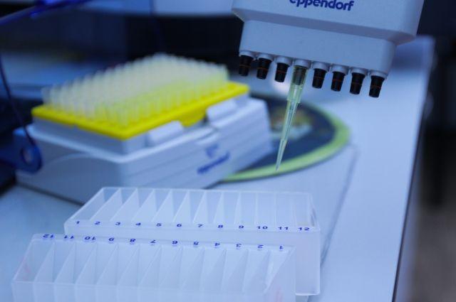 Химики МГУ открыли новый белок, защищающий клетки от гибели