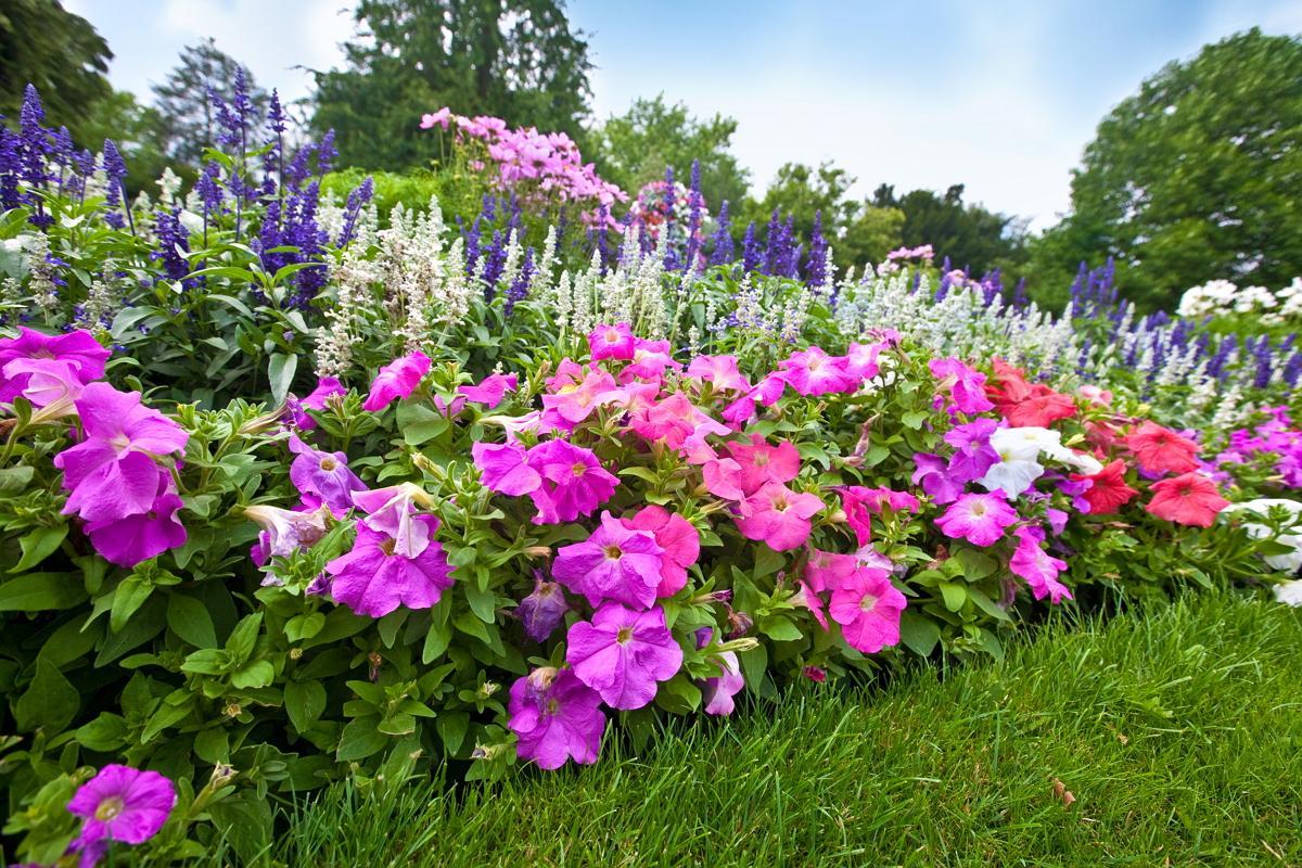 Многолетние цветы 73
