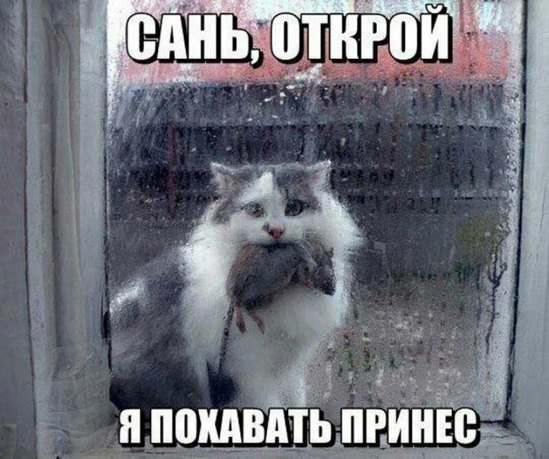 http://cdn.fishki.net/upload/post/2016/04/28/1935093/picsart-04-28-084320.jpg