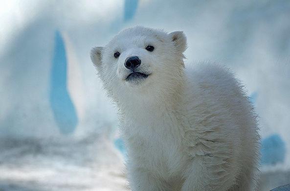 Медвежонок Ростик переехал жить в Китай