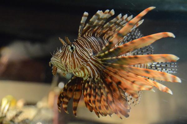 Самые ядовитые в мире рыбы