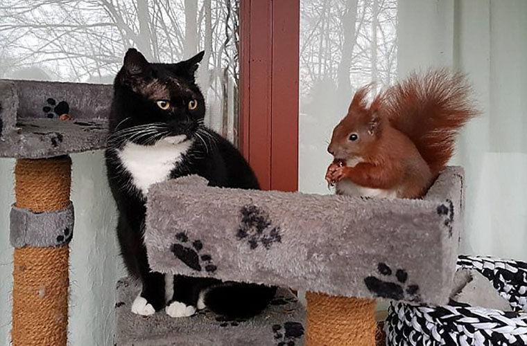 Кот подружился с белкой, упавшей с дерева