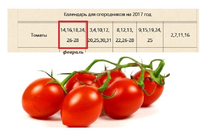 Когда сеять томаты на рассаду в 2017 году