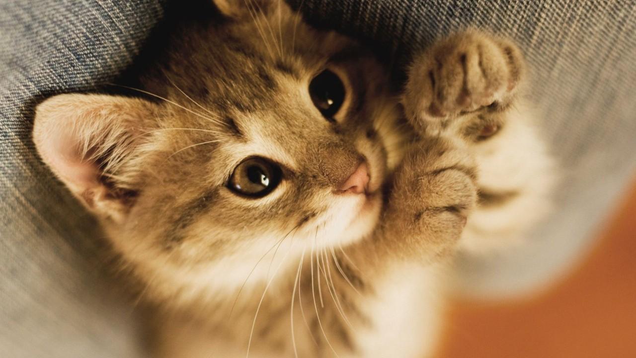 Как найти общий язык с котом? Самый полный разговорник сигналов, которые подают нам наши любимцы!