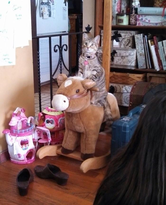 """""""Она видела как наши дети качались на этой игрушке и теперь делает также"""" кошки, приколы, прикольные фото животных, смешные кошки"""