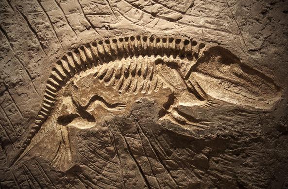 Ученые считают, что динозавров убил не астероид