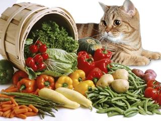 КОШКИН ДОМ. Экстравагантные кошки