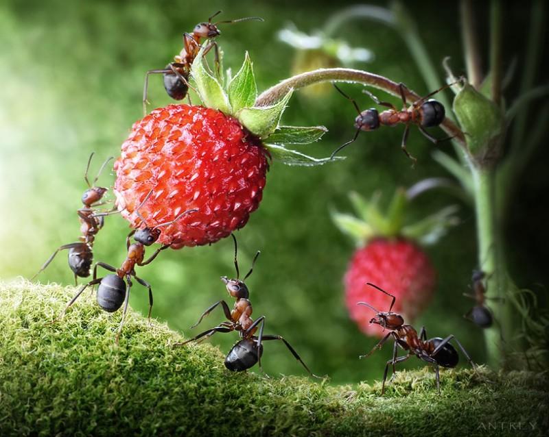 5 способов борьбы с садовыми муравьями