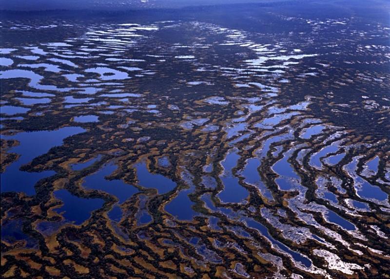 Васюганские болота природа, факты