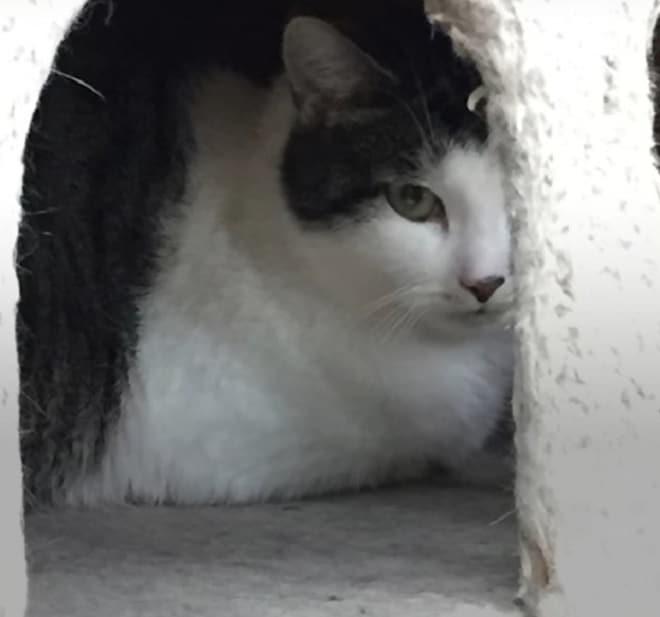 Кошка была так напугана, что боялась выйти из кошачьего домика