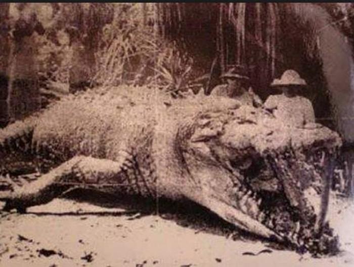 Крокодил Крис и его убийцы, 1957 год, Австралия было, история, фото