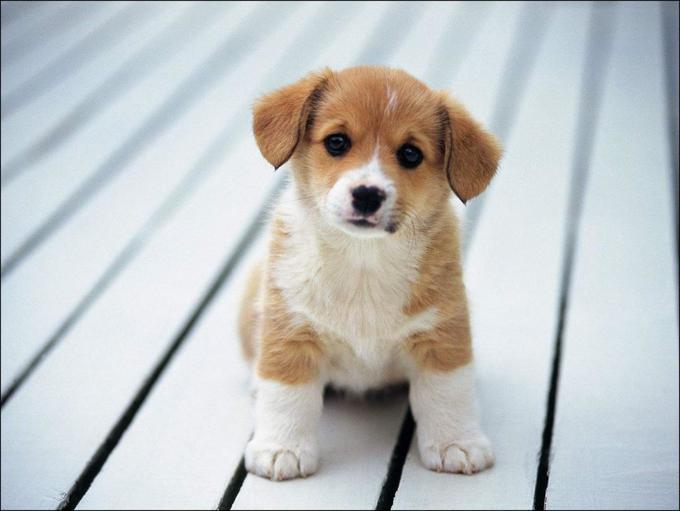 «Тетенька, возьмите щенка». Проникновенный рассказ о том, как одно воспоминание изменило сразу 3 жизни