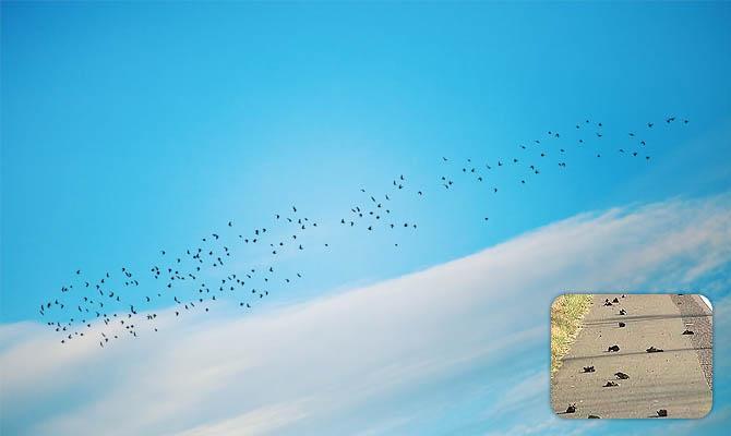 Долина падающих птиц - Интересные факты о Сверхъестественном и Паранормальном