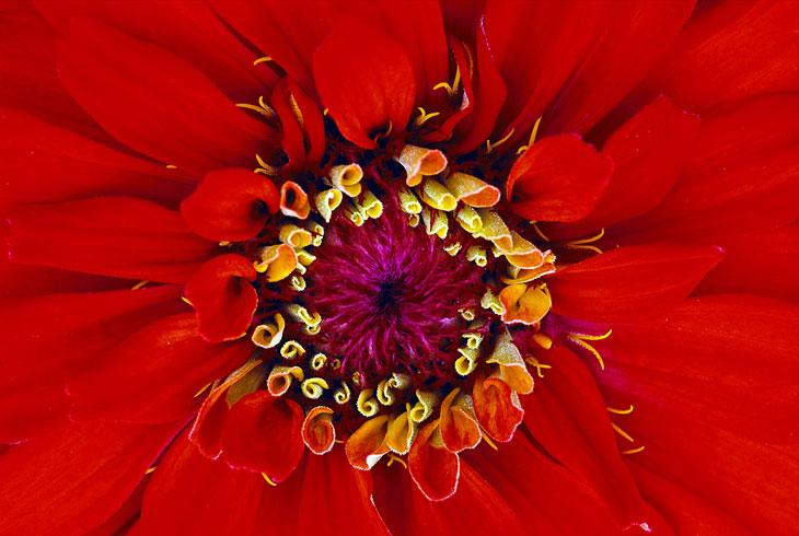 Невероятно красивые текстуры в природе