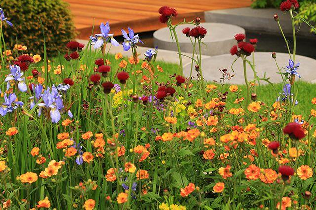 Модные сорняки, которые украсят Ваш сад...