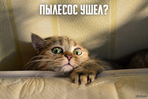 Фото кот и пылесос