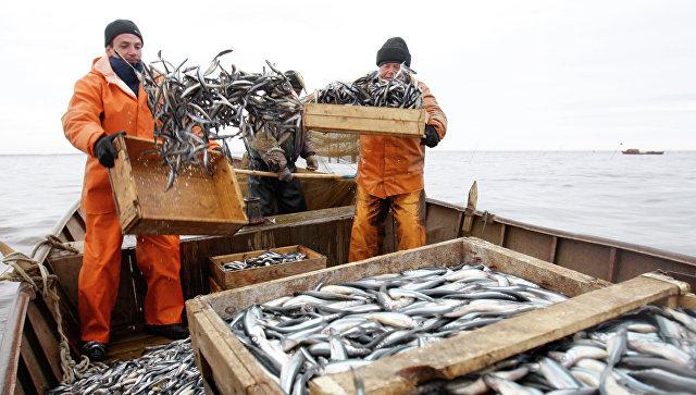 """""""Доступная рыба"""": Россиян предупредили о росте цен на рыбу"""