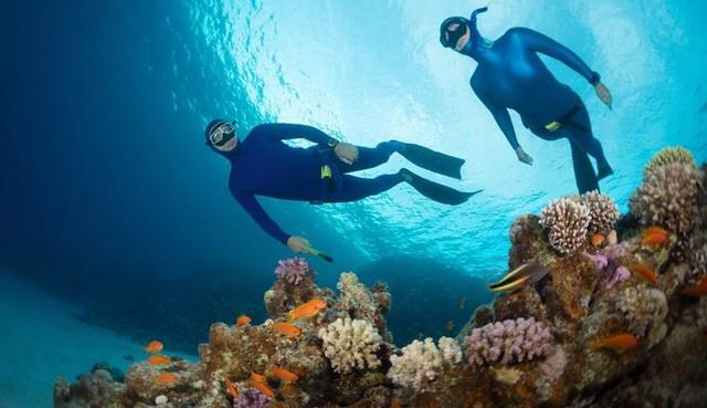 Дайверы жалуются на пугающие звуки, доносящие с глубин Красного моря