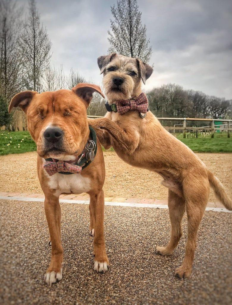 Дружба, от которой замирает сердце: маленький пёс заботится о своем слепом друге