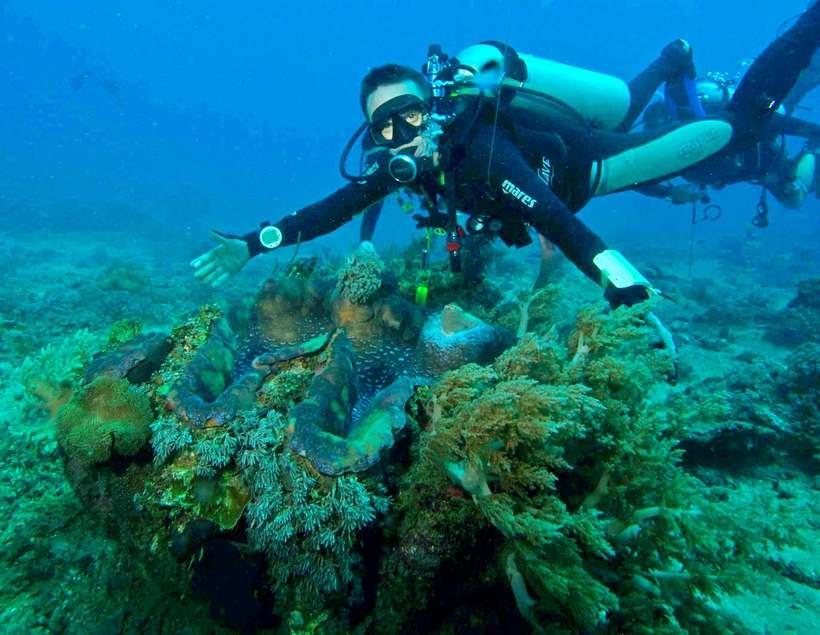 Гигантская тридакна — самый большой моллюск в мире весом до 300 килограммов