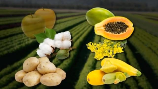 Пальмовое масло, химические овощи, ГМО-продукты — все это похоже на спланированную спецоперацию.